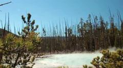 Dead trees Yellowstone geyser basin. Yellowstone National Park Stock Footage