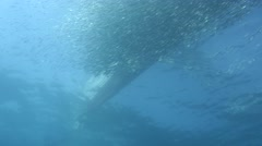Bait ball of fish under boat Stock Footage