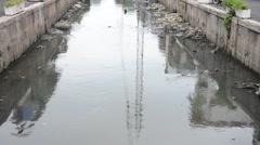 Water monitor or Varanus salvator swimming in wastewater - stock footage