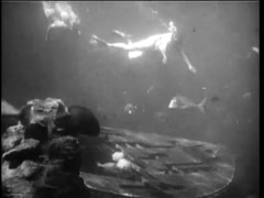 Undersea view of scuba divers exploring a shipwreck, 1960s Stock Footage