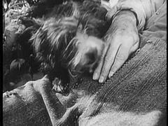 Dog resting its head on sleeping man in field, 1940s Stock Footage
