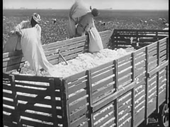 Workers loading truck with bales of cotton, 1940s Stock Footage