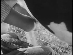 Close-up of person milking cow on farm, 1940s - stock footage