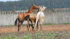 Young horses comunicating Stock Footage