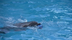 Dolphin and blue ball Stock Footage