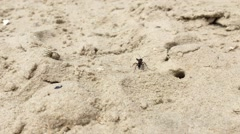 Large wasp, hornet grabbed and dragged spider to its nest in sand, on beach Stock Footage