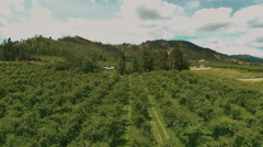 4K: Orchard Aerial/Vineyard Flyover Pristine - stock footage
