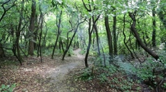 in italy forest   trail - stock footage