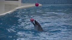 Dolphin juggling pink balls Stock Footage