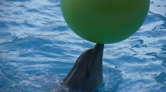 Dolphin plays a large green ball Stock Footage