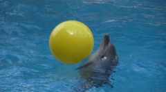 Dolphin throws a yellow ball Stock Footage