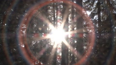 Solar Spectrum Zoom Through Forest Trees Stock Footage