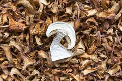 Dried chanterelle and boletus mushrooms - stock photo