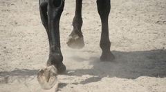 horse on sandy road, slow motion  Stock Footage
