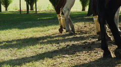 Legs of a horse with shin pads. Slight slow motion. N Stock Footage