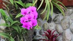 Puerto rico flower closeup2 Stock Footage