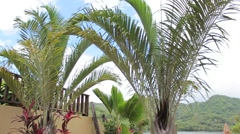 Souther puerto rico palm tree2 Stock Footage