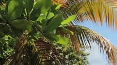Southern puerto rico palm tree closeup Stock Footage