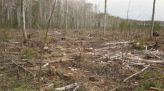deforestation, lifeless part of the forest ecology - stock footage