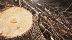The stump of a felled tree Stock Footage