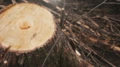 Female hands embracing a stump of felled tree - stock footage