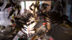Finches in cage Stock Footage