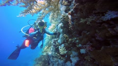 Underwater videographer, filming the Scorpion fish in the reef Elphinstone. Stock Footage