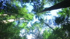 Trees in a forest Stock Footage