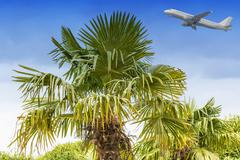 Palm and blue sky passenger airliner. Stock Photos