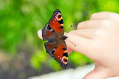 Peacock butterfly on the child fingers Stock Photos