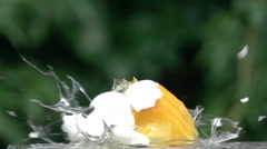 Eggs explosion slow motion Arkistovideo