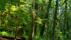 4K Deep Green Forest, Fern and Rainforest Landscape and Moss Stock Footage