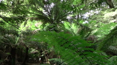 SLOW MOTION: Morning sun shining through big old lush fern jungle forest Stock Footage