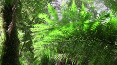 SLOW MOTION: Old lush fern and big ancient tree growing in vast overgrown forest - stock footage