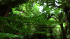 MACRO: View of young lush fern steam and its green leaves slowly moving in air - stock footage