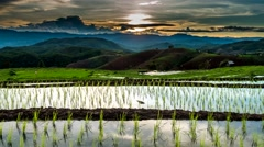 Sunset over the rice fields. Stock Footage