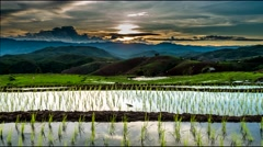 Sunset over the rice fields. - stock footage