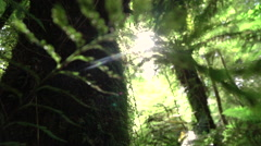CLOSE UP: View of big overgrown mossy lush tree trunk in beautiful sunny forest Stock Footage