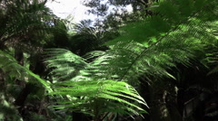 CLOSE UP: Sun shining on green canopies of beautiful fern in overgrown forest Stock Footage