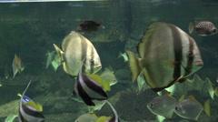 Fish Swimming In Aquarium - stock footage