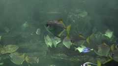 Underwater Fish Swimming In Fish Tank Stock Footage