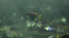 Underwater Fish Swimming In Fish Tank - stock footage