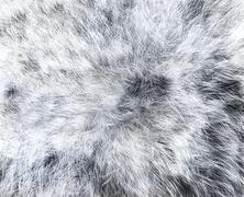 The texture of fur white wolf - stock illustration