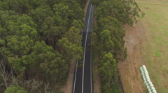 AERIAL: White SUV car driving along straight road surrounded by eucalyptus trees Stock Footage