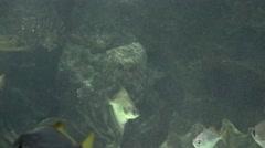 Fish Swimming In Tank Stock Footage