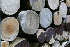 Log surface for background texture Stock Photos