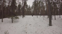 Three hikers snowshoeing in pine forest - Sweden Stock Footage