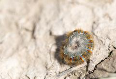 caterpillar on the ground in the nature close-up - stock photo