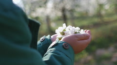 Girl walks with apple flower buds in hands Stock Footage