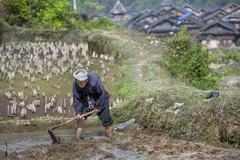 Chinese farmer works the soil in rice paddy using mattock. Stock Photos